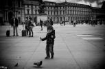 Les pigeons