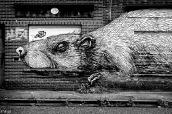 Le rat des villes